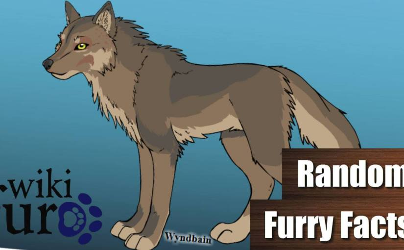 Hier BAUT ihr eure FURSONA | Random Furry Facts#4
