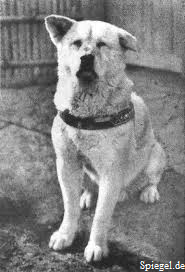 Nimoko's Nippon Blog – The Story of Hachiko